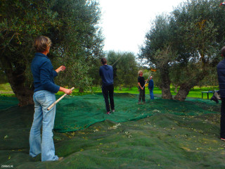 04-olive-groves-on-Crete