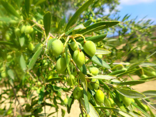 05-olives-from-crete-24072983743294