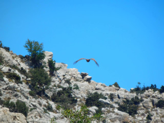 vultures-in-crete-greece