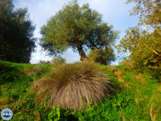 04-hiking-in-crete-for-a-week-334